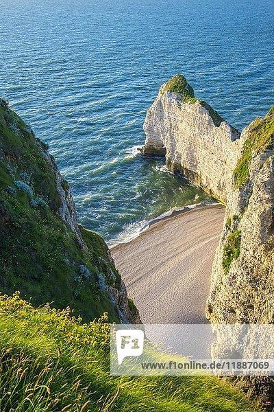 Weiße Kreidefelsen an der Küste des Ärmelkanals  Étretat  Normandie  Frankreich  Europa