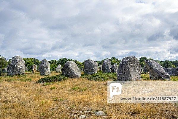 Neolithische Steine  Alignements de Carnac  Carnac Steine  Alignements de Menec  Carnac  Bretagne  Frankreich  Europa