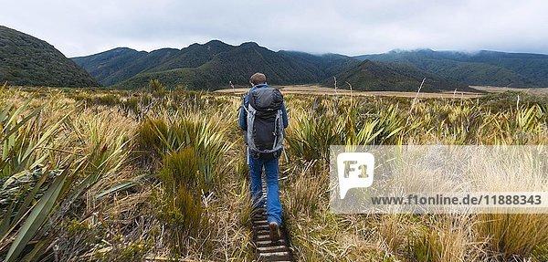 Wanderer auf Wanderweg durch Sumpflandschaft  Pouakai Circuit  Egmont Nationalpark  Taranaki  Nordinsel  Neuseeland  Ozeanien Wanderer auf Wanderweg durch Sumpflandschaft, Pouakai Circuit, Egmont Nationalpark, Taranaki, Nordinsel, Neuseeland, Ozeanien