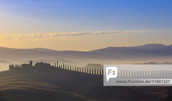 Toskanische Landschaft mit Zypressenallee und Bauerngehöft bei Sonnenaufgang  Morgendämmerung  San Quirico d'Orcia  Val d'Orcia  Toskana  Italien  Europa