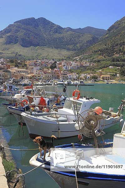 Boats in fishing port  Castellammare del Golfo  Trapani province  Sicily  Italy  Europe