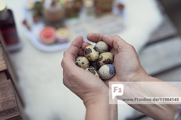 Cropped image of female farmer holding quail eggs
