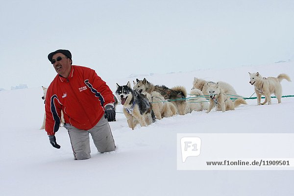 Eskimo with sled and dogs. Greenland.