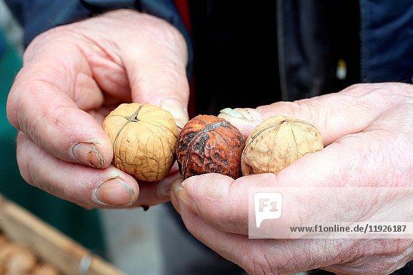 Walnuts on market.