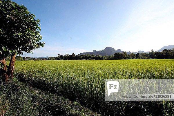 Path through rice paddies leading to mountains.