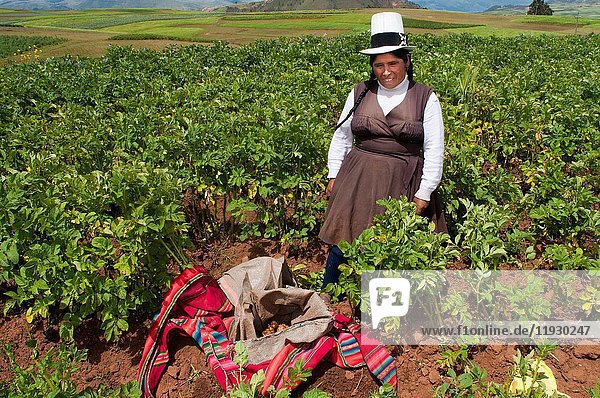 A woman growing potatoes in the Sacred Valley near Cuzco. The Sacred Valley of the Incas or the Urubamba Valley is a valley in the Andes of Peru  close to the Inca capital of Cusco and the ancient city of Machu Picchu. It is located in the present-day Peruvian region of Cusco. In colonial documents it is referred to as the 'Valley of Yucay. ' According to recent researches it encompasses the heartland of the Inca Empire. The valley is generally understood to include everything between Calca and Lamay  Písac  and Ollantaytambo. The valley was formed by the Urubamba River  also known as Willkanuta River (Aymara  'house of the sun') or Willkamayu (Quechua). The latter  in Quechua  the still spoken lingua franca of the Inca Empire  means the sacred river. It is fed by numerous rivers which descend through adjoining valleys and gorges  and contains numerous archaeological remains and villages. The valley was appreciated by the Incas due to its special geographical and climatic qualities. It was one of the empire's main points for the extraction of natural wealth  and one of the most important areas for maize production in Peru northwards from Pisac. The early Incas may have come from Wimpillay  as their mummies had been discovered there. Large scale maize production started around 1400 as Inca urban agriculture based on varieties bred in Moray  either a governmental crop lab or a seedling nursery of the Incas.