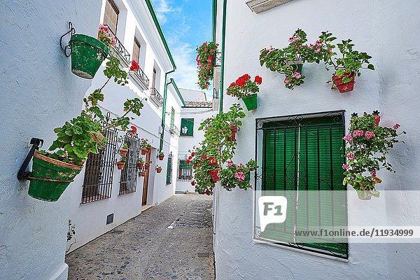 Flowerpots in Barrio de la Villa (old quarter)  Priego de Cordoba  Sierra de la Subbetica  Route of the Caliphate  Cordoba province  Andalusia  Spain.