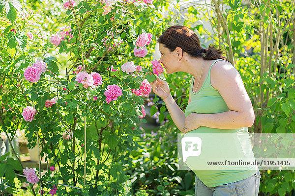 Schwangere Frau riecht an Rosen
