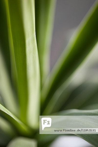Nahaufnahme einer Pflanze