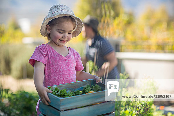 Young girl in garden  carrying wooden crate of vegetables