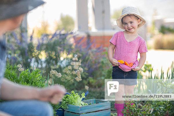 Vater und Tochter im Garten  Tochter sammelt Gemüse im T-Shirt
