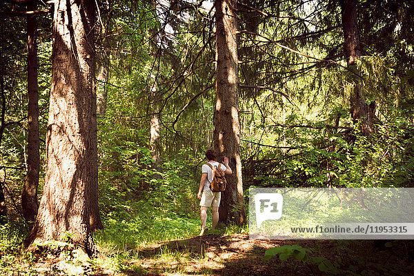 Rückansicht eines jungen männlichen Wanderers  der durch den Wald wandert