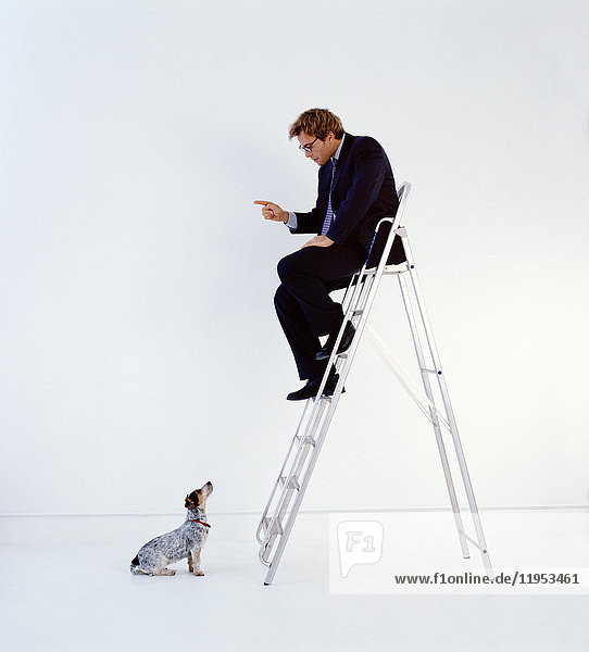 Businessman wearing dark suit sitting indoors on top of a ladder  teaching dog sitting on floor.