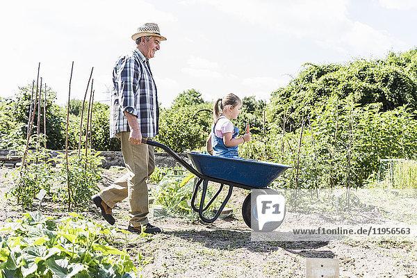 Großvater schiebt Schubkarre mit Enkelin im Garten