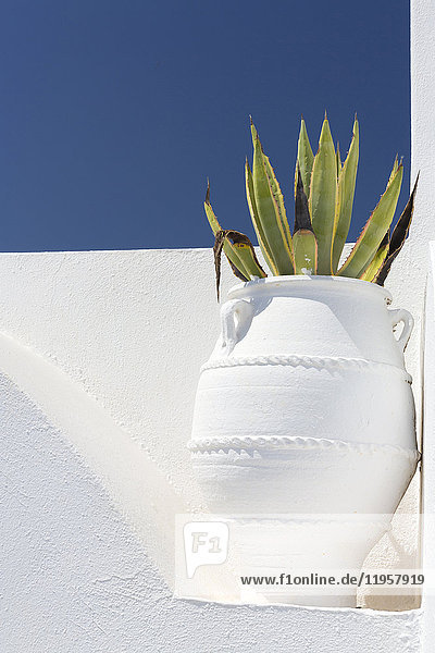 Cacti in whitewashed urn against white wall and blue sky  Imerovigli  Santorini  Cyclades  Greek Islands  Greece  Europe