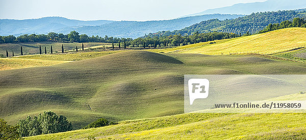 Meadows  Asciano  Val d'Orcia (Orcia Valley)  UNESCO World Heritage Site  Tuscany  Italy  Europe
