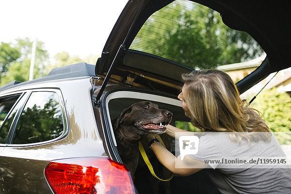 Woman with Labrador Retriever on leash in car trunk