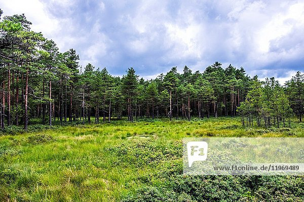 The Viru Bog in Lahemaa National Park  Estonia.