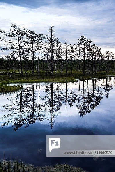 The Viru Bog in Lahemaa National Park  Estonia.