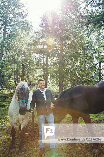 Man with horses in woodland  Tirol  Steiermark  Austria  Europe