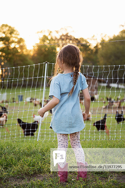 Young girl on farm  looking at chickens through wire fence  rear view
