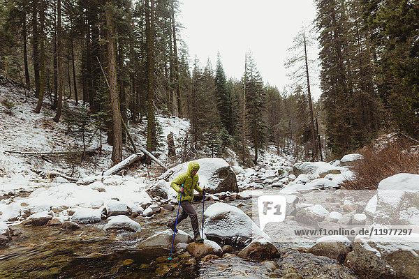 Young male hiker stepping over river rocks in snowy forest  Sequoia National Park  California  USA