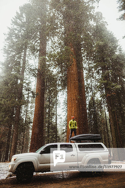 Young man looking out at forest from top of vehicle  Sequoia National Park  California  USA