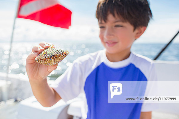 Junge untersucht Jakobsmuschel auf Boot,  Tauchflagge im Hintergrund,  Golf von Mexiko,  Homosassa,  Florida,  USA