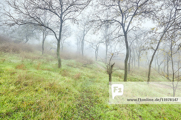 Bäume am Hang im Winter  Odessa  Odessa Oblast  Ukraine  Europa