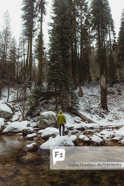 Rear view of young male hiker looking out at snowy forest from river  Yosemite Village  California  USA