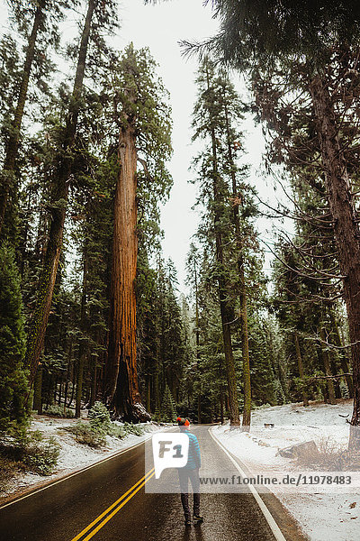 Rear view of young male hiker looking out at snowy forest  Sequoia National Park  California  USA