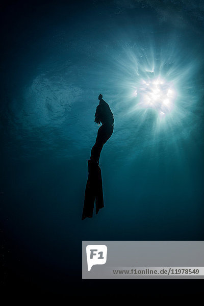 Underwater view of silhouetted female free diver moving up towards sun rays  New Providence  Bahamas