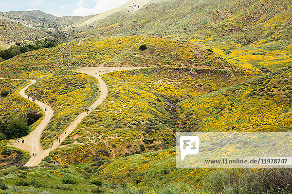Distant landscape view of tourists looking at californian poppies (Eschscholzia californica)  North Elsinore  California  USA