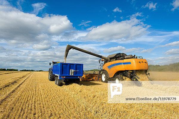 Mähdrescher und Traktor bei der Weizenernte