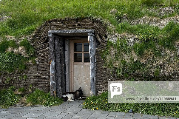 A goat is guarding the door to a turf house hosting a restaurant at Modrudalur - the highest located farm in Iceland.