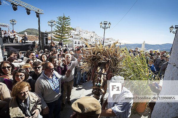 Mule driver loading up in his donkey cane sugar among the attendees in the celebration of 1st Day of Honey Cane in Frigiliana. Frigiliana  Andalusia  Spain  Europe.