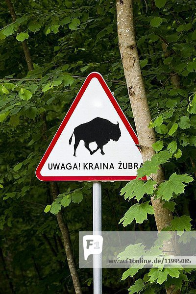 Traffic sign with the warning that we can stumble upon some bison. Bialowieza National Park. Bialowieza  Podlasie  Poland  Europe.