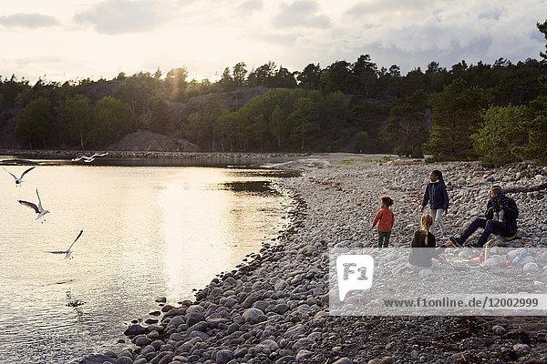 Familie beim Anblick von Vögeln am Strand bei Sonnenuntergang