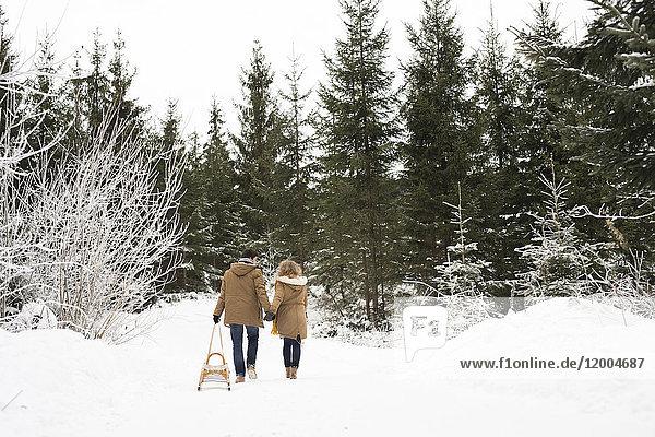 Rückansicht eines jungen Paares  das sich in den Schlitten im Winterwald verliebt hat.