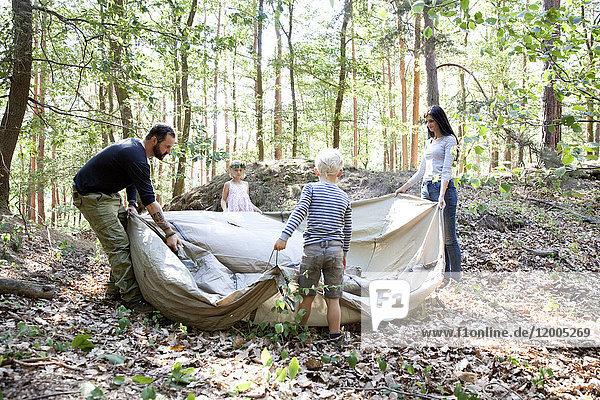 Familie im Wald baut gemeinsam ein Zelt auf