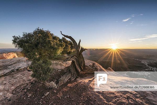 Tree in canyon at sunset  Moab  Utah  United States