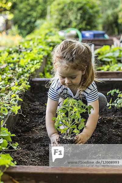 Caucasian girl planting in garden
