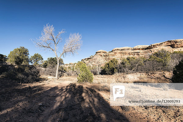 Shadows near tree in desert  Moab  Utah  United States