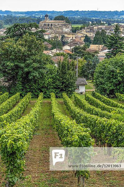 France  Gironde  AOC Castillon Cotes de Bordeaux vineyard  vines on the hillside near Castillon-la-Bataille