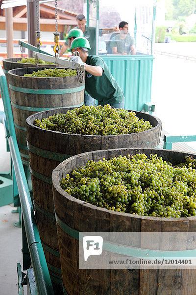 France  Aquitaine  Pyrenees Atlantiques (64)   region of Bearn  Gan  Jurancon vineyard France, Aquitaine, Pyrenees Atlantiques (64) , region of Bearn, Gan, Jurancon vineyard