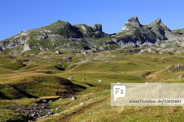 France  Nouvelle Aquitaine  Pyrenees atlantiques department (64)  Bearn country  Pyrenees National Park near Pourtalet montain pass (Aneou circle)