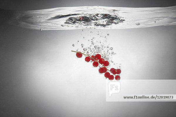 Nahaufnahme von roten Johannisbeeren im Spritzwasser