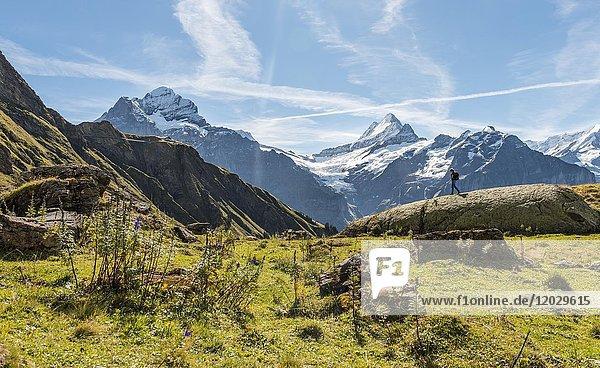 Wanderin auf einem Felsen,  hinten schneebedeckte Eiger-Nordwand,  Eiger,  Mönch,  Jungfrau,  großes Fiescherhorn,  Grindelwald,  Bern,  Schweiz,  Europa