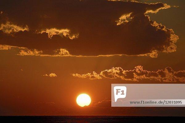Sonnenuntergang  Etosha Nationalpark  Namibia  Afrika