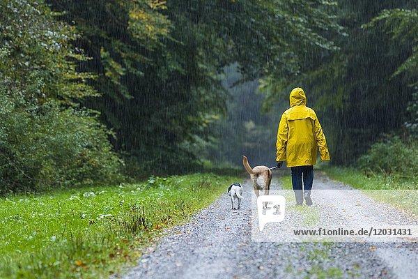 Frau beim Spaziergang mit Hunden im Regen  Unterallgäu  Bayern